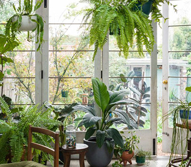 Plant Life Balance